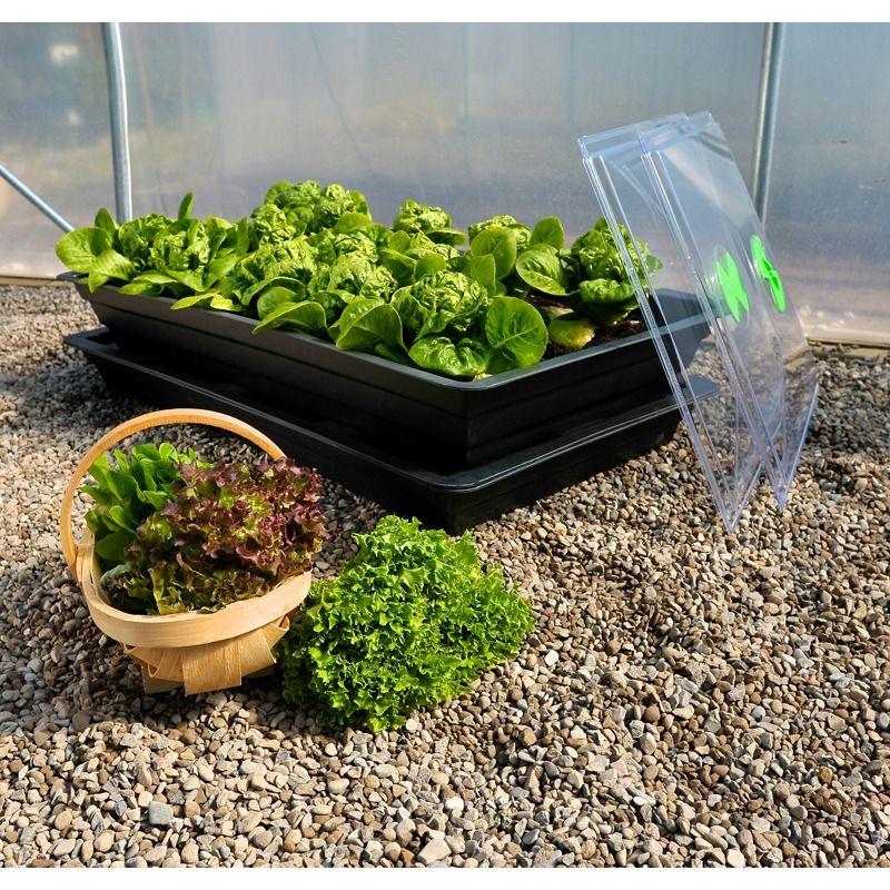 Saladgrow