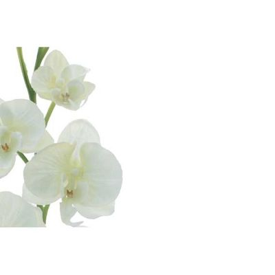 White Flower Greeting Cards