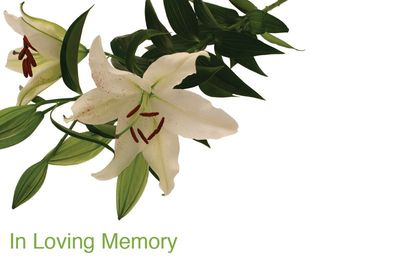 In Loving Memory White Lilies Sympathy Card