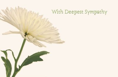 With Deepest Sympathy White Chrys Sympathy Card