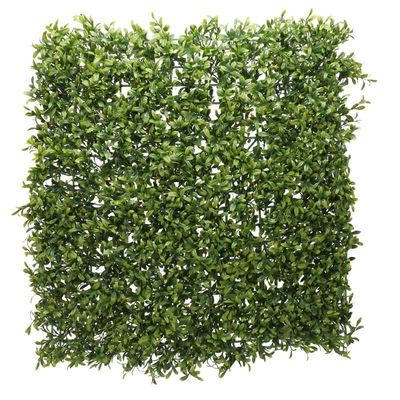 Green Plant Wall