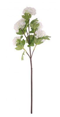 White Garden Viburnum