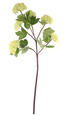 Green Garden Viburnum