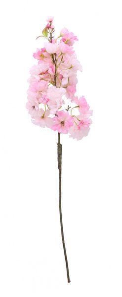 Light Pink Single Apple Blossom