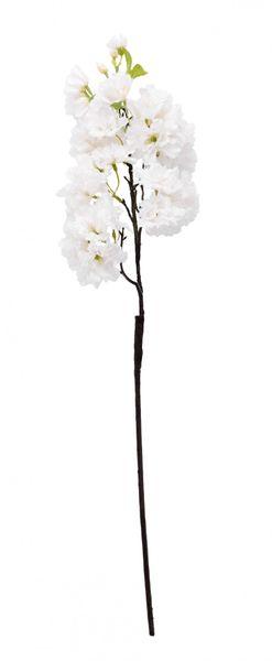 White Single Apple Blossom