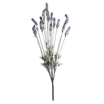 Purple Lavender Plant