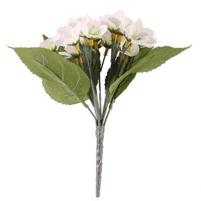Cream Violet Plant