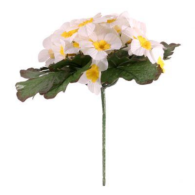 Cream Primula x25 Flowers
