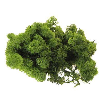Olive Green Reindeer Moss