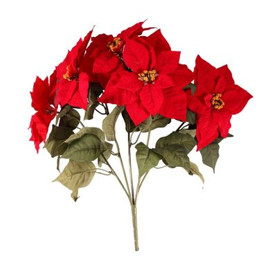Large Poinsettia Bush
