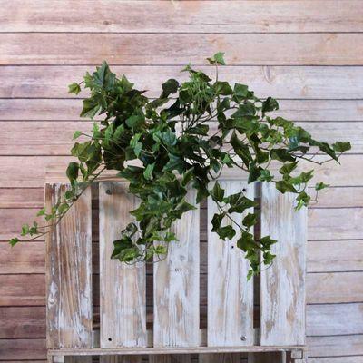 Sandringham Ivy Bush 71cm