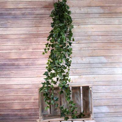 Green Sandringham Ivy