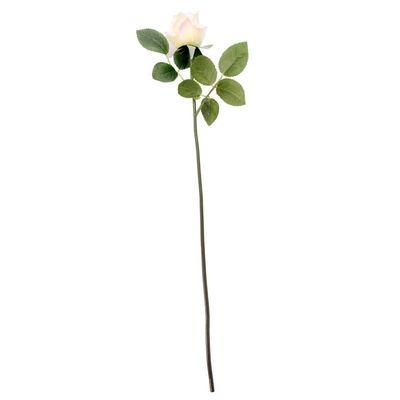 Arundel Rose Bud Ivory (24/240)