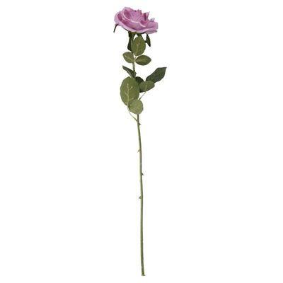 Arundel Open  Rose Lavender (24/192)