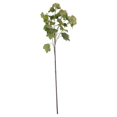 Viburnum in bud Spray Green (12/96)
