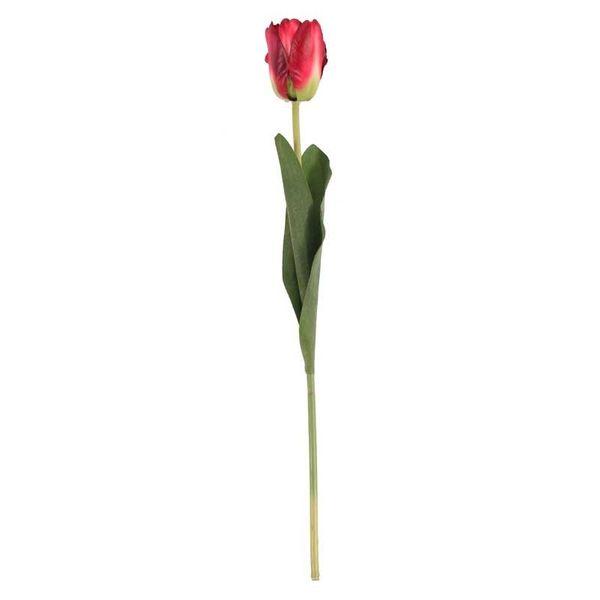 Tulip Red  (24/576)