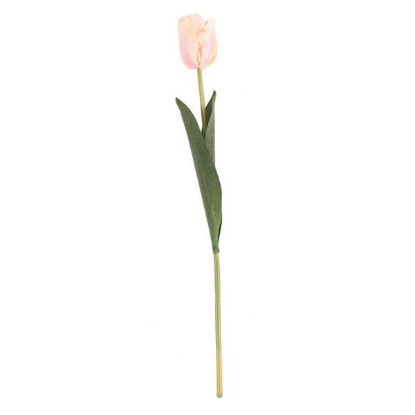 Tulip Champagne (24/576)