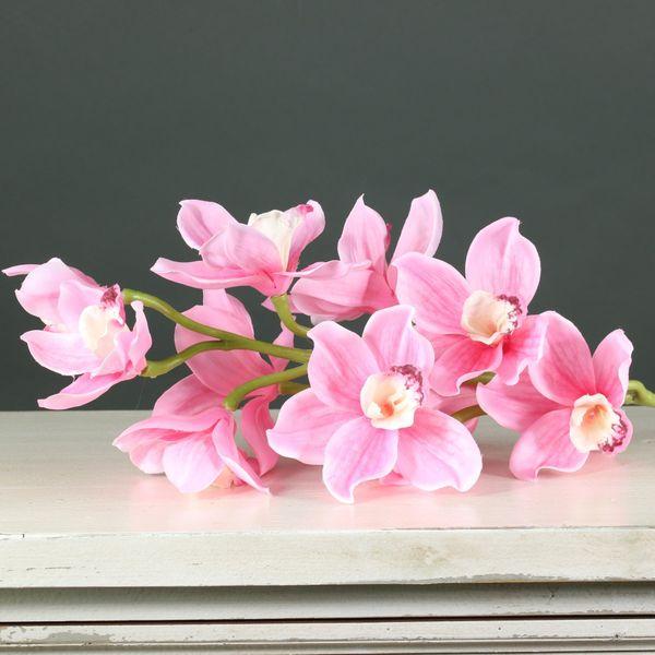 Tintagel Cymbidium Orchid Pink (12/60)