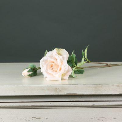 Tintagel Spray Rose Cream (24/240)