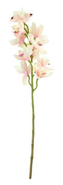 Tintagel Cymbidium Orchid Light Pink  (12/60)