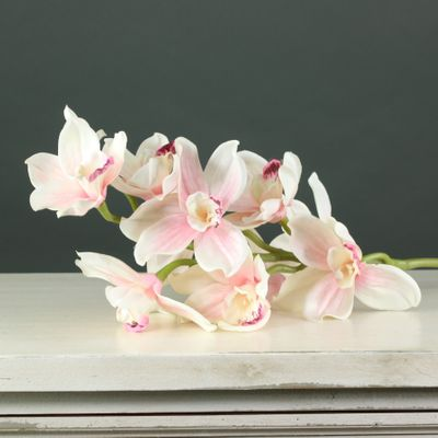 Tintagel Cymbidium Orchid Light Pink  (12/60)