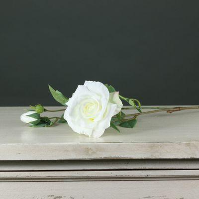 Tintagel Spray Rose White (24/240)
