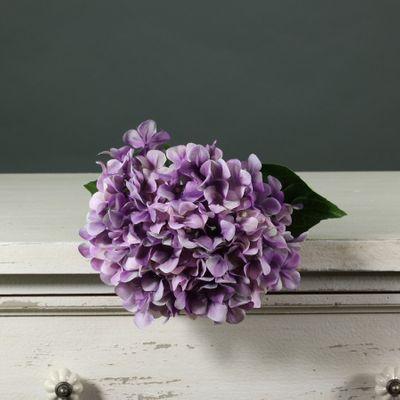 Tintagel Hydrangea Lilac (12/144)