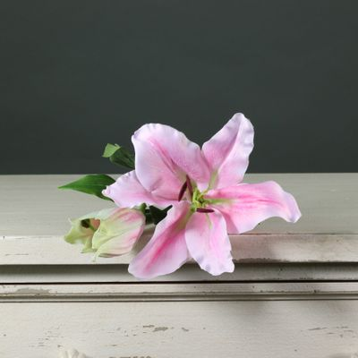 Tintagel Lily Light Pink (12/144)