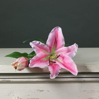 Tintagel Lily Dark Pink (12/144)