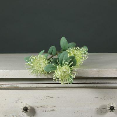 Tintagel Leucospermum (12/144)