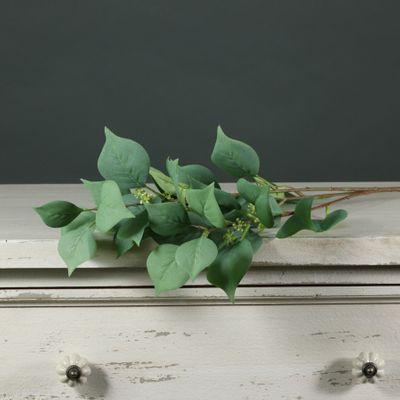 Tintagel Seeded Eucalyptus (24/240)