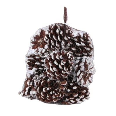 White Tipped Pinea Cones (12pcs) (1/6)