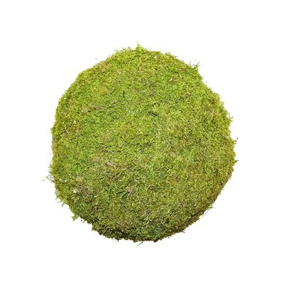 10cm Flat Moss Ball (Preserved Green) (1/72)