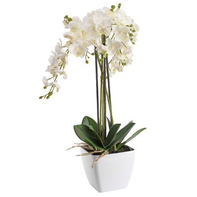 Potted Royal White Orchid Plant (56cm)