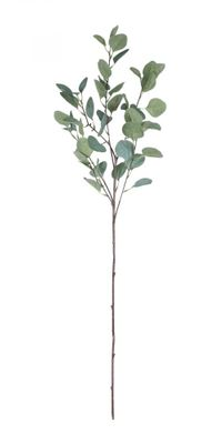 Single Eucalyptus Silver Dollar Stem