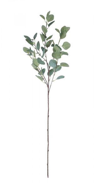 Single Eucalyptus Silver Dollar Stem