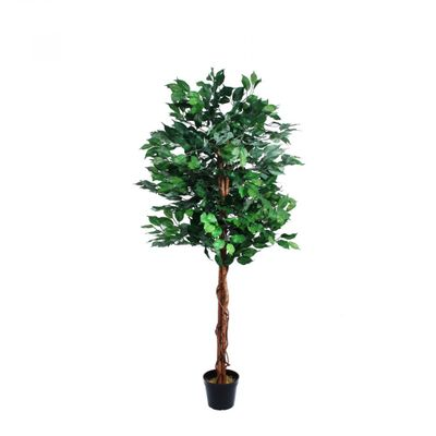 Green Ficus Tree (150cm)