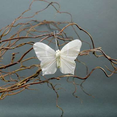 Cream Butterflies with Clips 7cm (x6)