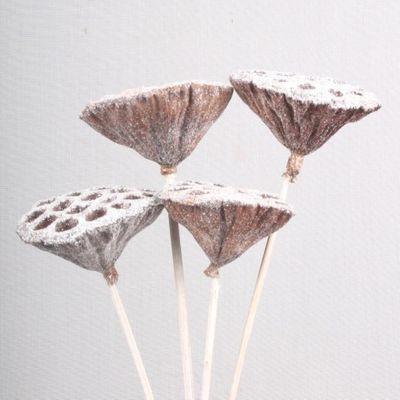 Medium Lotus Heads White Glitter on Stems (x5)