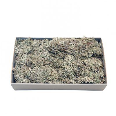 Grey Moss w/Tray (500gr)