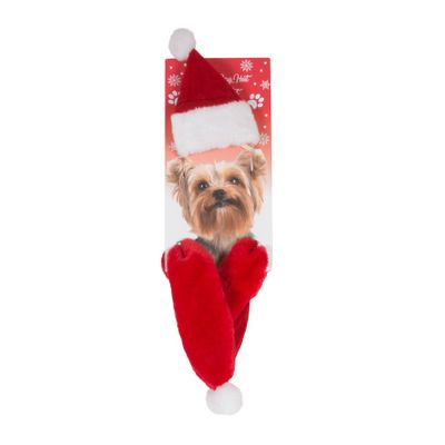 Dog Father Christmas Hat & Scarf