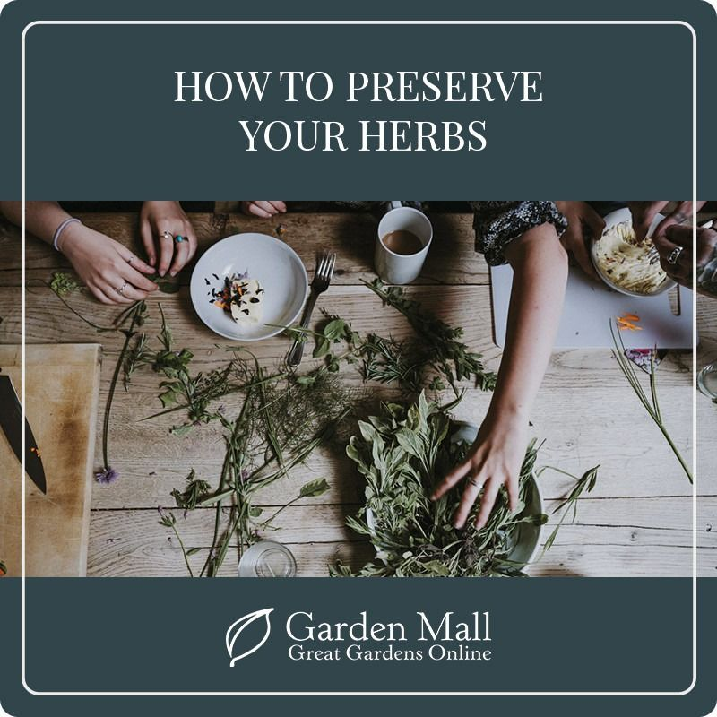 How to preserve your herbs.jpg