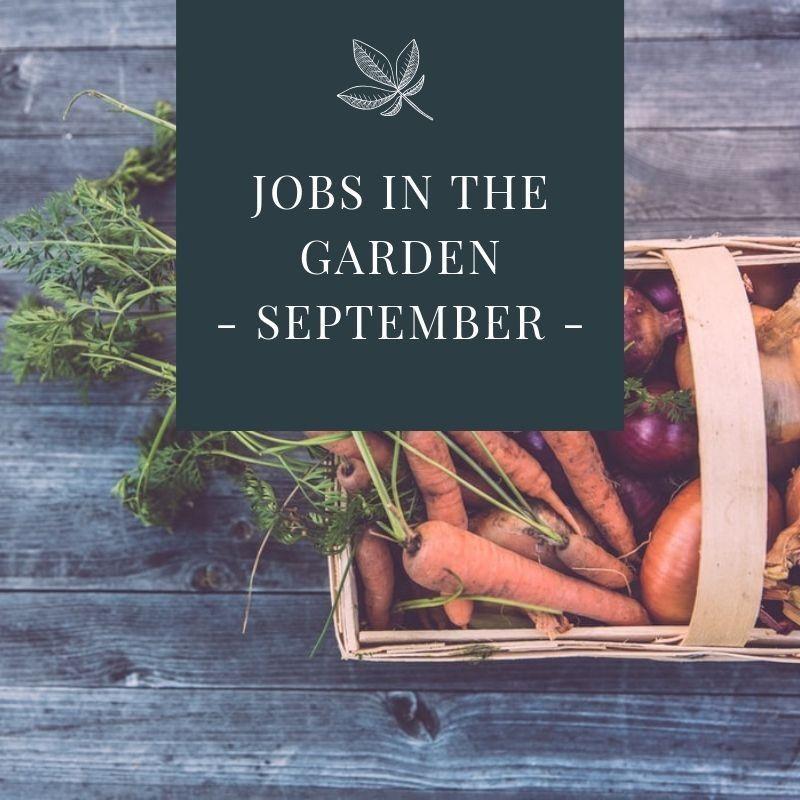 JOBS IN THE GARDEN - SEPTEMBER -.jpg