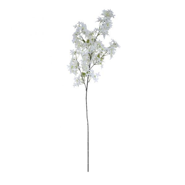 Jasmine Flower Stem