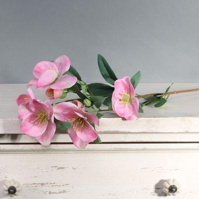 Tintagel Hellebore Pink (12/144)