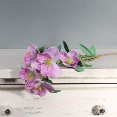 Tintagel Hellebore Lavender (12/144)