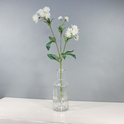 Astrantia W/14 Flowers White (50cm)