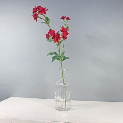 Astrantia W/14 Flowers Dusky Pink (50cm)