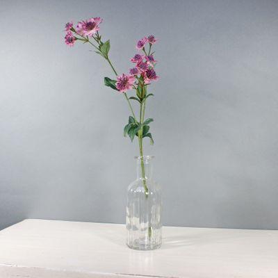 Astrantia W/14 Flowers Mauve (50cm)