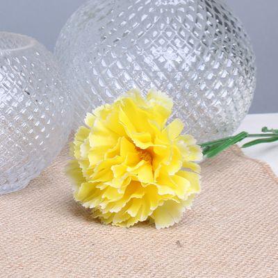 Yellow Single Carnation